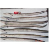 供应冷冻带鱼 顶级 进口 7800元/吨;巴基斯坦!