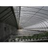 供应新型钢架温室大棚设计建造石家庄温室建设公司