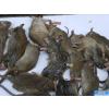 供應中山殺蟲|中山滅蟲|中山滅鼠|中山白蟻防治|滅蚊蠅|滅蟑螂|殺滅宿舍臭蟲|滅蛀蟲|滅螞蟻