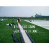 供应北京塑料草坪幼儿园假草坪价格
