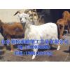 供应山羊模型