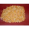 供应印度本土玉米