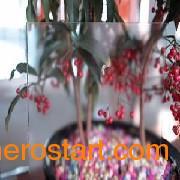 {推荐}优质低反射玻璃高光玉砂高光蒙砂冰雕玻璃专业加工厂