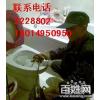 供应惠州疏通马桶 恼人的马桶堵塞问题