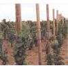 供应厂家直供搭建葡萄架用的塑钢线