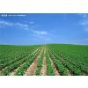 供应农业生产专用消毒剂