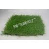 供应人造草坪地毯,仿真地毯草坪,休闲草坪,装饰草坪,假草坪