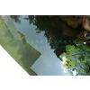 供应鱼池水处理