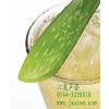 供应芦荟丁 库拉索芦荟凝胶丁 珍珠奶茶原料 食用芦荟