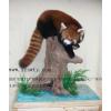 供应两栖类浸制标本制作_动物标本