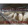 供应羊皮价格三四十斤左右的小尾寒羊小羊苗多少钱哪里卖羊