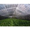 H6广东顺亮常年供应屋顶遮阳网|海南遮阳网价格|东莞绿色遮阳网