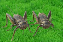 供应仿真蟋蟀