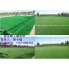 南宁诺莱供应球场铺设丨人造草皮丨塑胶跑道丨场地铺设