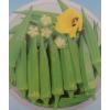 供应补肾菜种子 秋葵种子 羊角豆种子