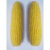 供应超甜水果玉米种子
