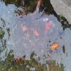 南京市专业处理鱼池水专家;处理发绿;发臭等;见效快。feflaewafe