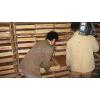 供应海南黄粉虫海南黄粉虫养殖技术海南黄粉虫价格及种虫