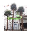 供应仿真棕榈树 保鲜棕榈树 华盛顿棕榈树  小伙都惊呆了仿真棕榈树