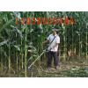 供应平顶山小型玉米收割机价格