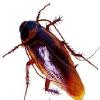 專業滅蠅殺蟲公司,讓蟲子一次凈!!