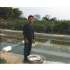 供应广东牛蛙养殖|广东牛蛙养殖|广东牛蛙种苗|广东牛蛙蝌蚪
