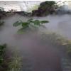 供应供应生态温室,生态温室价格