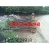 供应安徽大叶女贞、香樟、乌桕、三角枫、紫薇、桂花、红叶李、栾树