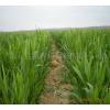 供应玉米专用膜