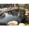 供应别墅鱼池景观水处理方案,水处理方案
