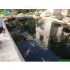 供应家庭鱼池景观水处理方案 天天清澈见底