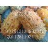供应央视上榜新水果—火参果(奇异果)火星果种子价格