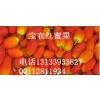 供应新水果之王红蜜果【红蜜果种子】红蜜果种苗 红蜜果批发