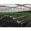 供应异形管式无土栽培设备
