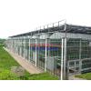 供应文洛型玻璃温室大棚