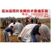 供应如何处理小麦玉米秸秆喂牛羊猪鸡好啊?山东有卖秸秆发酵剂菌种吗?