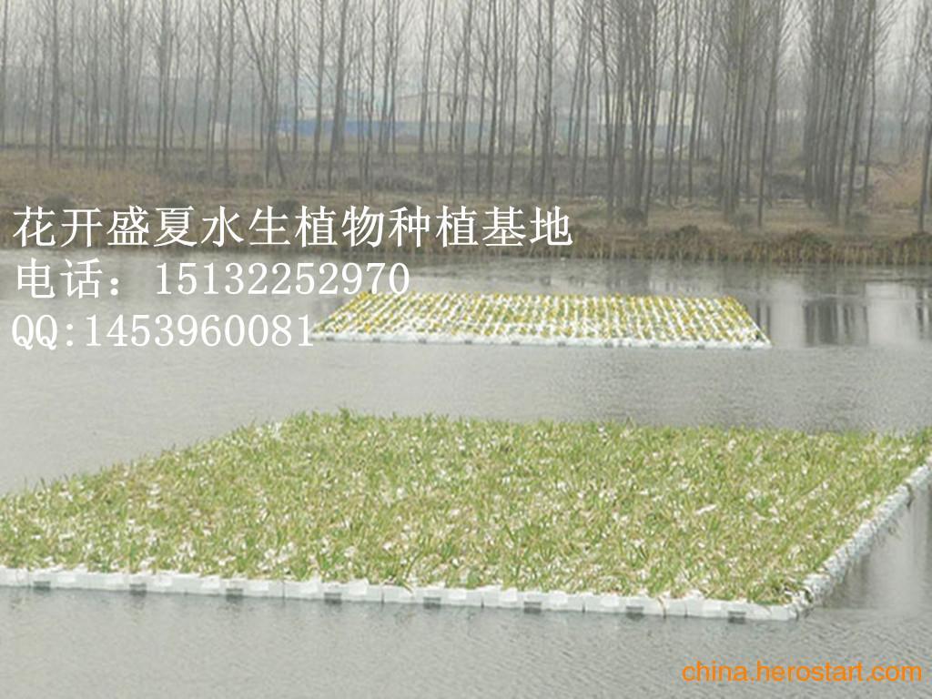 供应水生植物种植浮岛-水生花卉种植浮岛-人工浮岛价格