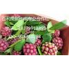 供应原生态保健水果  【长寿果】