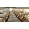 供应众诚湖羊养殖湖羊成品羊1