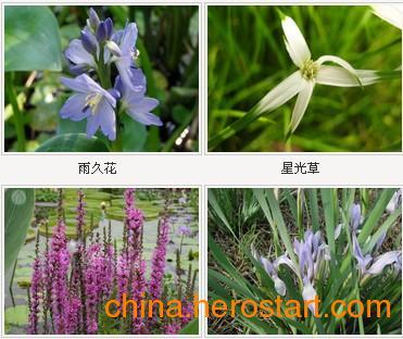 供应汕头水生花卉,首选懿鸿水生植物
