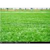 休闲型人造草坪/人造草坪价格/杭州人造草坪供应