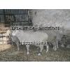 供应品种羔羊肉深加工—诚招合作伙伴