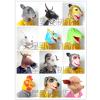 供应十二生肖面具 12生肖面具 动物面具厂家