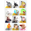 供应十二生肖动物头套面具 鼠牛虎兔龙蛇马羊猴鸡狗猪面具