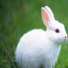 哪儿有有信誉度的兔肉食品批发市场