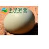 供应正宗野鸡蛋 柴鸡蛋 土鸡蛋 价格
