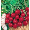 供应亩产3万公斤的牧草种子 高蛋白俄罗斯饲料菜种根
