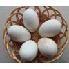 供应批发鹅蛋白莲鹅蛋优质鹅蛋生态鹅蛋绿色鹅蛋