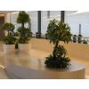 供应桫椤树组-仿真花,仿真树,仿真植物,仿真花艺