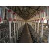 供应鼎盛厂家专供不锈钢双面干湿料槽 干湿自动喂料器 价格低